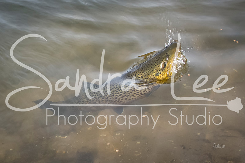 Fish Photography