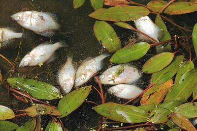 Fish Fry- Pelican Lake