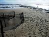 Brielle Beach Nov 11  31112