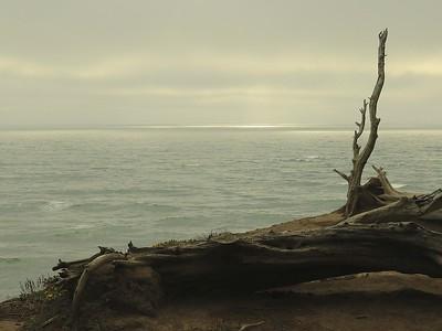 Fitzgerald Marine Reserve 072718  73