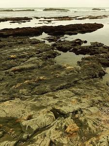 Fitzgerald Marine Reserve 072718  51