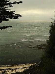 Fitzgerald Marine Reserve 072718  56