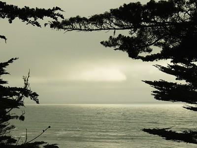 Fitzgerald Marine Reserve 072718  60
