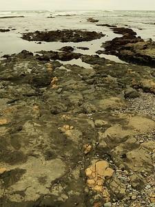 Fitzgerald Marine Reserve 072718  49