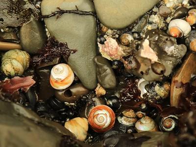 Fitzgerald Marine Reserve 072718  11