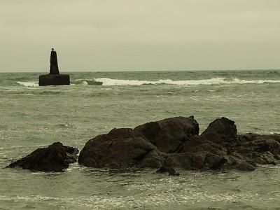 Fitzgerald Marine Reserve 072718  04