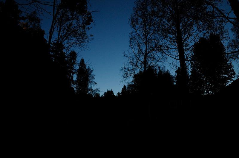 """2012-10-11. Gråskimlig fladdermus kunde höras både """"naturell"""" och m h a fladdermusdetektor."""