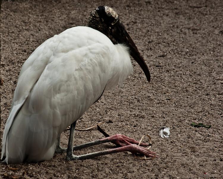 Stork in repose
