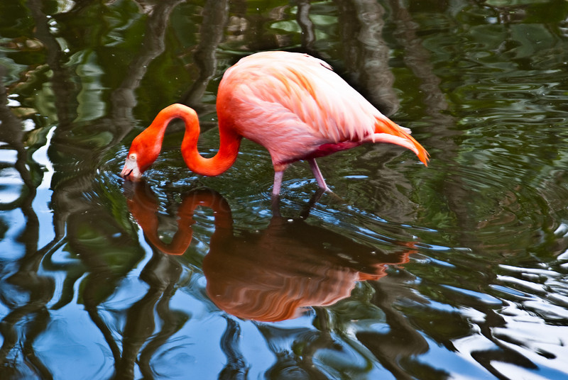 Reflective Flamingo