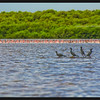 Cormorants (foreground) and Lesser Flamingos