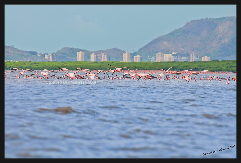 Countless Flamingos