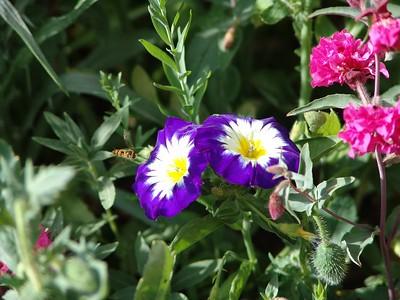 Fleurs & Nature