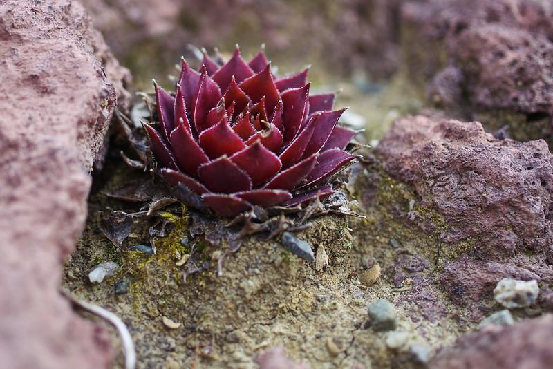 "Petite Plante Grasse de ""Mars"""