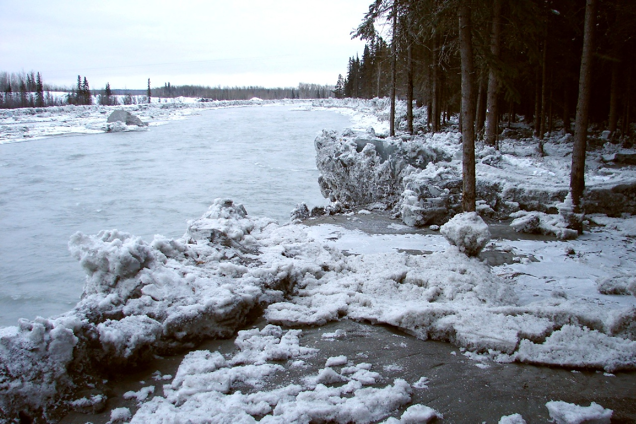 2/5/07 - The cutbank on the right side of the river just below the bridge received a heavy deposit of ice as well, as the river came at least 3 feet above the ground here.