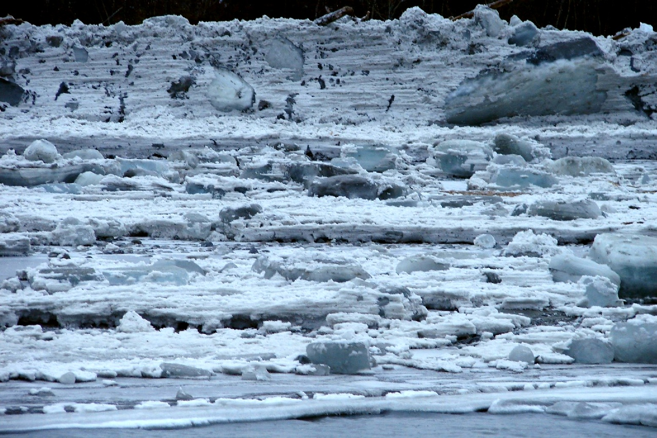 2/5/07 - Looking back across the river, the gouging of the fast ice by the blocks moving downstream can be seen clearly.