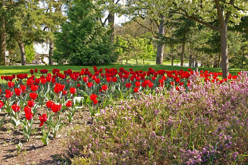 Bush Park flowers - Salem, Oregon
