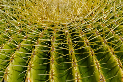 Golden Barrel Cactus - Atlanta Botanical Garden  ©Gerald Diamond All Rights Reserved