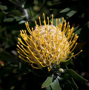 Botanical Garden, Blue Mountains, Australia 2014   ©Gerald Diamond All rights reserved