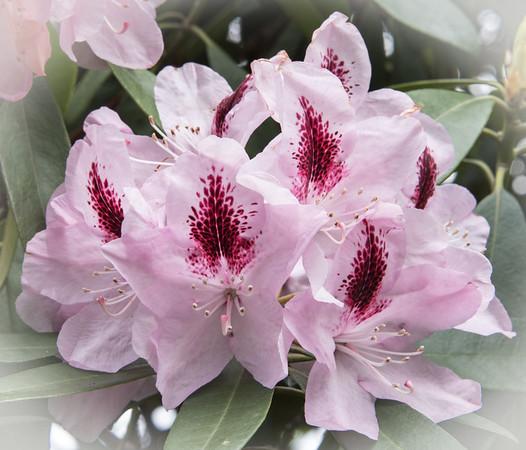 Melbourne Botanical Garden, Australia 2014  ©Gerald Diamond All rights reserved