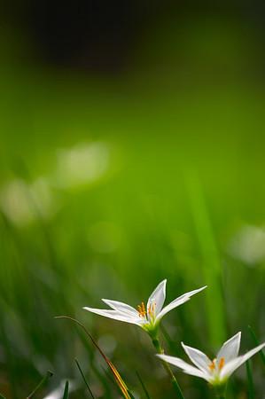 Flora Dance