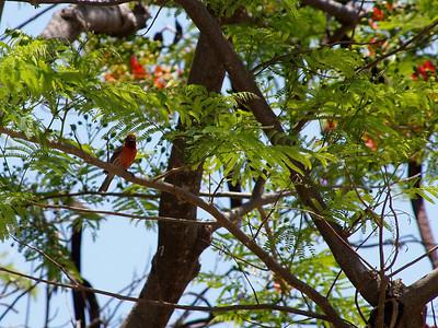 Flora & Fauna Mexico