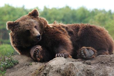 The Bear and The Bee — Mese a medvére támadó darázsról