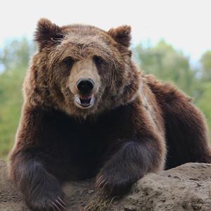 Bear with Me! — Nézzünk medveszemet!