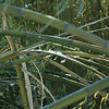 The heavy snows of the 2013-2014 winter season took a toll on the bamboo.