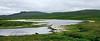 26.Eriophorum species 2011.7.24#042. Alaska Cotton Grass. Island Lake, Denali Hwy, Alaska.