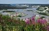 62.Epilobium 2013.7.16#048. Fireweed overlooking a bluff on the Copper River, Alaska.