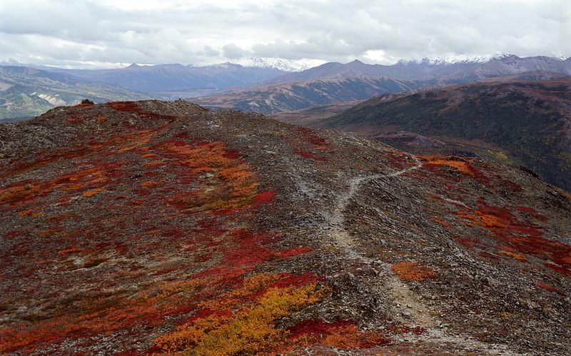Z-2000.9.2#16. A fall alpine Landscape of Dwarf Willow and Bearberry. Anltler Creek Ridge, near Healy Alaska.