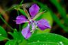 Flora - ID :