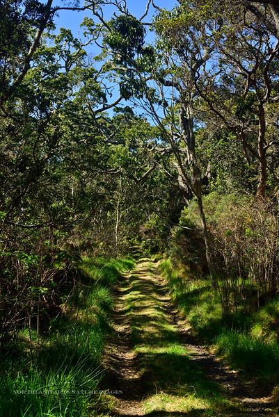 HI-Hakalau Forest 2015.2.3#168. Mauna Kea Volcano Hawaii.