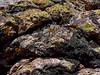AZ-LM-Lichens 2018.6.19#039. Canyon Lake area, Apache Trail,Arizona.