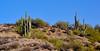 AZ-CTS-Carnegiea gigantea 2017.12.14#058. Saguaro Cactus. Route 188, easr of Roosevelt Lake Arizona.