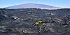 HI-F-Vaccinium 2015.2.2#112. Colonizing Lava on Mauna loa, Mauna Kea in background.