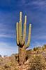 AZ-CTS-Carnegiea gigantea 2007.3.4#0035.6. Saguaro Cactus. My first capture of this grand plant. Apache Trail Arizona.