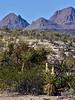 AZ-AOY-Yucca baccata 2018.11.7#279. the Banana Yucca. Route 70, Gila County Arizona.