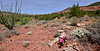 AZ-DS-Desertscape 2019.5.5#095. Red Rock Country, Yavapai County Arizona.