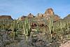 AZ-AT, Saquoro Cactus. Apache Trail, AZ. #34.0041. 2x3 ratio format.