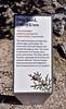 AZ-TS-Juniperus monosperma 2018.4.18#113.2. Oneseed Juniper. Montezuma's Well, Yavapai County Arizona.
