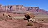"AZ-F-Psathyrotes pilifera 2019.10.16#2044.3. Small blue grey mounds of Hairybeast Turtleback near a ""Balance Rock"" along the Vermillion Cliffs, east of Cliff Dwellers Canyon Arizona."