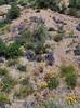 AZ-DS-Desertscape 2019.4.1#079. A  closeup of various plants along Route 188 east of  Roosevelt Lake Arizona.
