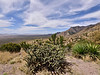 AZ-CTS-Cylindropuntia spinosior 2018.4.9#182. The Cane Cholla. Montezuma's Pass,Coronado Monument looking into the Sierra Madre occidental in Mexico.