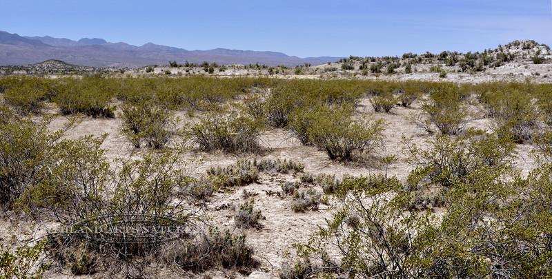 AZ-CTS-Grusonia species 2018.5.6#994. Old West Highway, route 70, San Carlos area Arizona.
