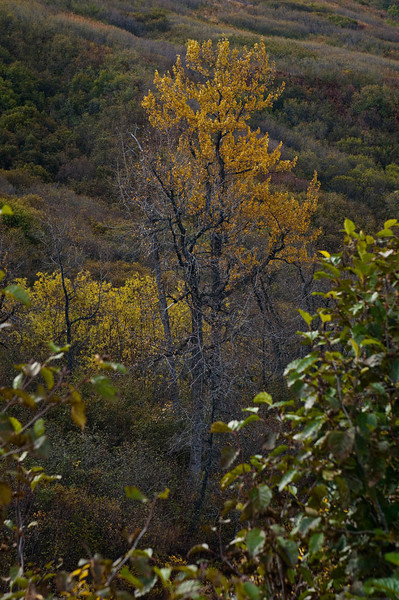 Late September 2011, Hatcher Pass State Park, near Wasilla, Alaska.