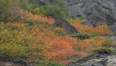 The brush is beginning to change colors with the advancing autumn along Turnagin Arm south of Anchorage, Alaska.