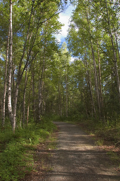 This walking and bicycle trail is located near Campbell Creek in Anchorage, Alaska. This photograph was taken in late July 2006.