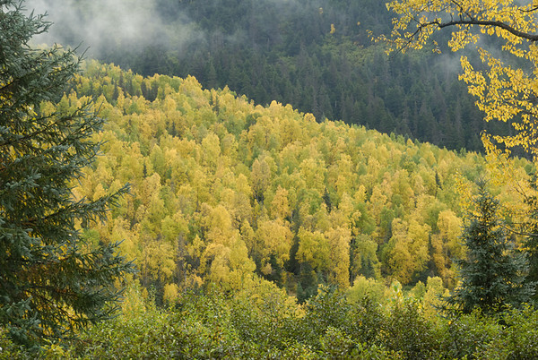 The hills near Hope, Alaska are at the height of their fall colors in mid-September. Hope is on the Kenai Peninsula south of Anchorage, Alaska.