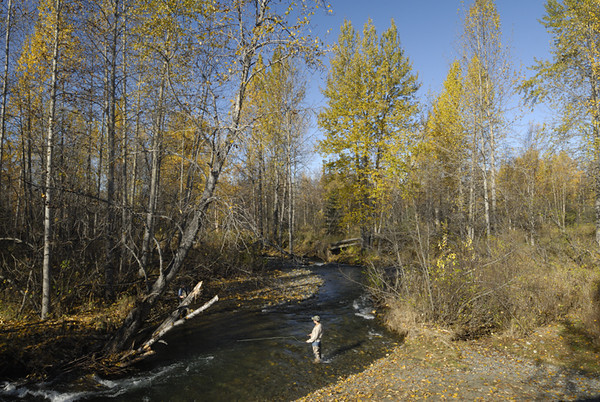 A fisherman takes advantage of beautiful sunny weather in late September along Campbell Creek near Anchorage, Alaska.